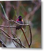 He Flashed Me With Fuchsia Metal Print
