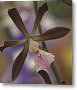 He Pua Ke Aloha - The Flower Of Love - Orchidea Tropicale Metal Print