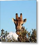 Head Above The Rest Metal Print
