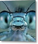 Head And Compound Eyes Of Damselfly Metal Print
