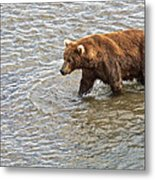 Head Grizzly Bear With Intense Fishing  Focus For Salmon In Moraine River In Katmai Np-ak Metal Print