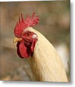 Head Of A Rooster Metal Print