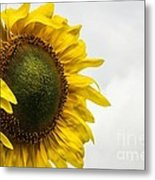 Head Up To The Rains - Sunflower Metal Print