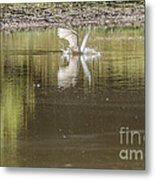 Headless Snowy Egret Of Rum Creek Metal Print