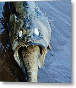 Heads Or Tails Metal Print