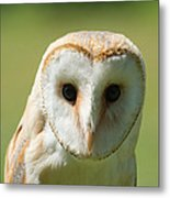 Headshot Of Common Barn Owl Metal Print