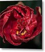 Heart Of A Hibiscus 2 Metal Print