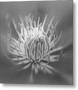 Heart Of A Red Clematis In Black And White Metal Print