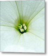Heart Of The Petunia Metal Print