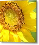 Heart Of The Sunflower Metal Print
