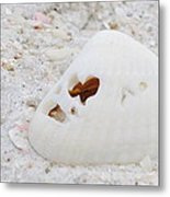Heart Shells Metal Print
