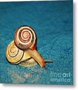 Heart Snails Metal Print