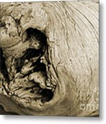 Heartwood - Sepia Tone - Wonderwood Collection - Olympic Peninsula Wa Metal Print