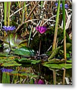 Heat Of The Afternoon - Down At The Lily Pond Iv Metal Print