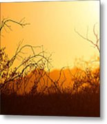 Heat Of The Day Metal Print