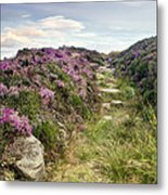 Heather On Simonside Hills Metal Print