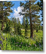 Heaven In The High Country Metal Print