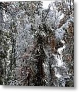 Heavy Snow On Fall Trees Metal Print