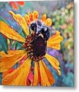 Helenium Bumble Bee Metal Print
