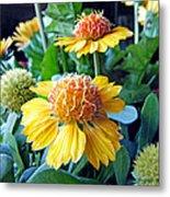 Helenium Flowers 1 Metal Print
