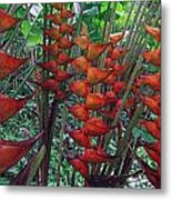Heliconia Haven Metal Print