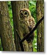 Hello Barred Owl Metal Print