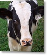Hello My Name Is Cow Metal Print