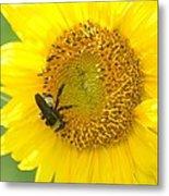 Hello Sunflower Metal Print