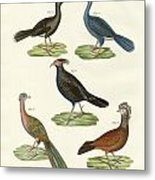 Hen-like Birds Of Hot Countries Metal Print