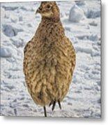 Hen Pheasant In The Snow Metal Print