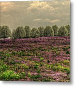 Henbit Up To The Bradfords Metal Print