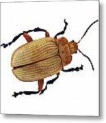 Henry Lin Beetle Metal Print