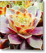 Hens And Chicks Series - Early Morning Quite Metal Print
