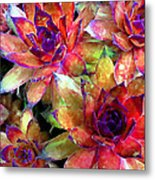 Hens And Chicks Series - Garden Brass Metal Print