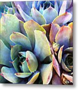 Hens And Chicks Series - Soft Tints Metal Print by Moon Stumpp