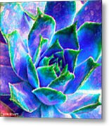 Hens And Chicks Series - Touches Of Blue  Metal Print