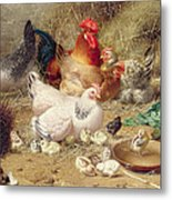 Hens Roosting With Their Chickens Metal Print