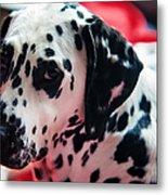 Her Eyes. Portrait Of Dalmation Dog. Kokkie Metal Print