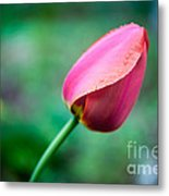 Herald Of Spring Metal Print
