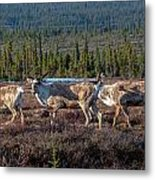 Herd Of Broad Pass Metal Print
