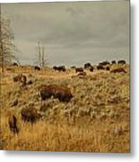 Herd Of Buffalo Metal Print