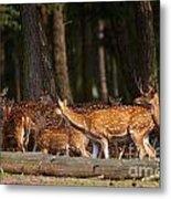 Herd Of Deer In A Dark Forest Metal Print