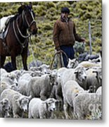 Herding Sheep Patagonia 3 Metal Print
