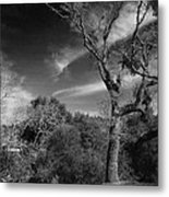 Here As I Stand Metal Print by Laurie Search
