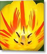 Here Comes The Sun Tulip Metal Print