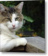 Here Is Looking At You Metal Print