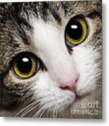 Here Kitty Kitty Close Up Metal Print by Andee Design