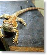 Here Lizard Lizard Metal Print