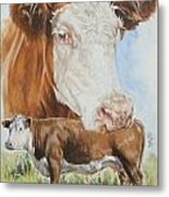 Hereford Cattle Metal Print