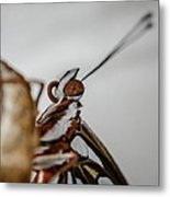 Here's Looking At You Squared Metal Print